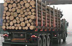 Export_dreva