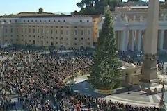 Vatikan_strom_2011