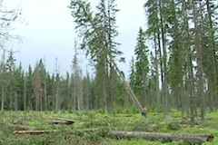 Cirkevni_lesy
