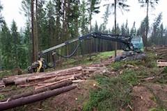 LESS lesni prace