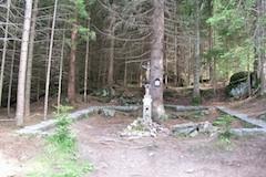 Cirkevni lesy