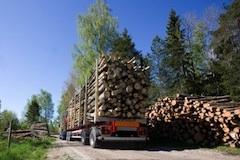 Drevo odvoz2