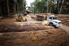 Les Amazonie