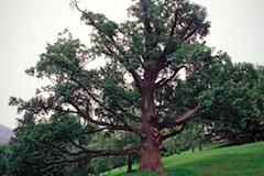 Strom roka1 m