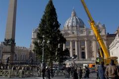 Vanocni strom Vatikan