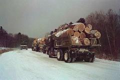 Ilegal drevo RUS