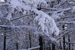 Les v zime 1