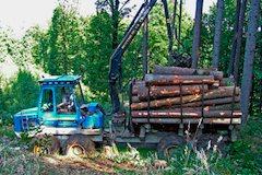 Lesni prace2