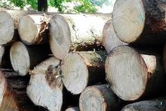 Drevo kulatina 8