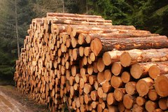 Drevo les1