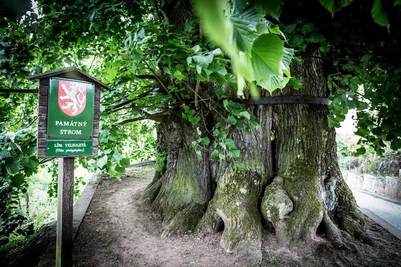 Evropsky strom2016 2