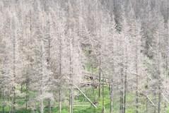 Les kurovec