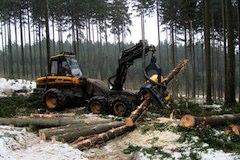 Lesni prace4