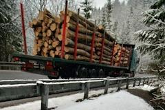 Drevo gulatina kamion