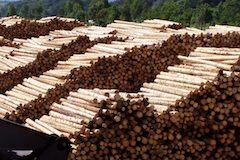 Drevo gulatina sklad2