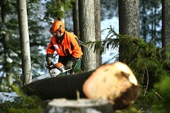 Lesni prace1