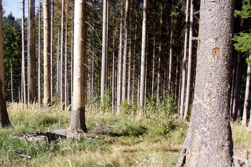 Trvale udržitelný rozvoj a neudržitelná ochrana přírody