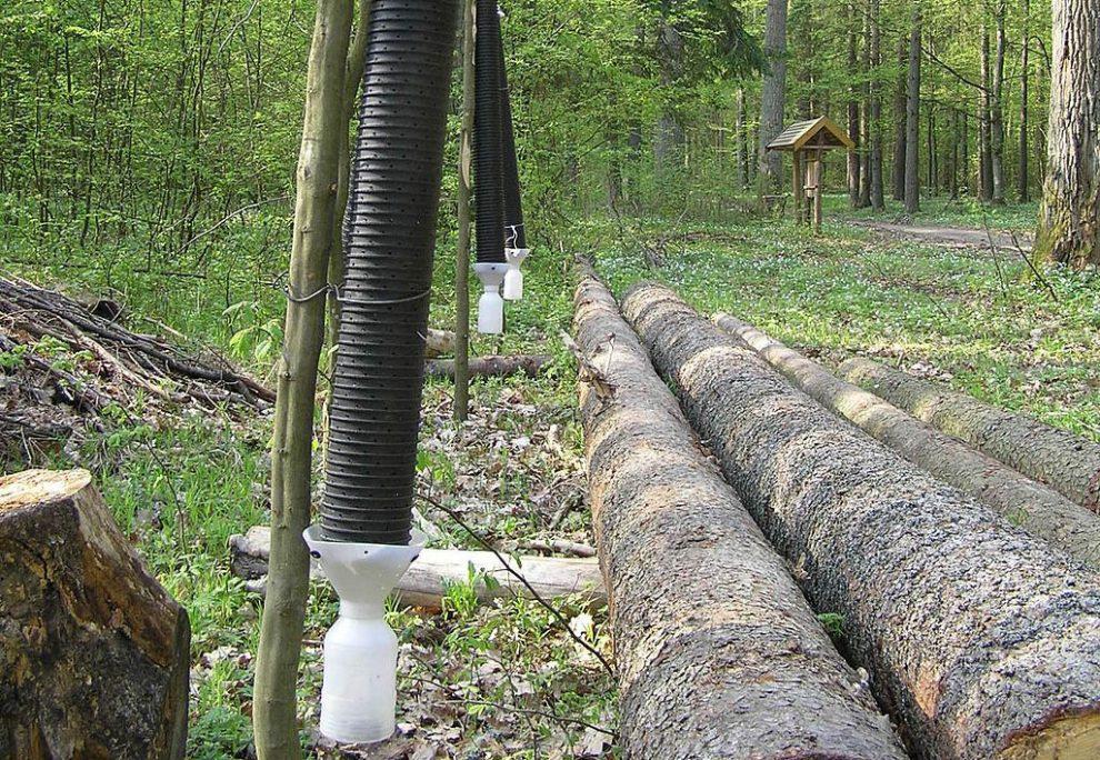 Jaké starosti mají Lesy České republiky?