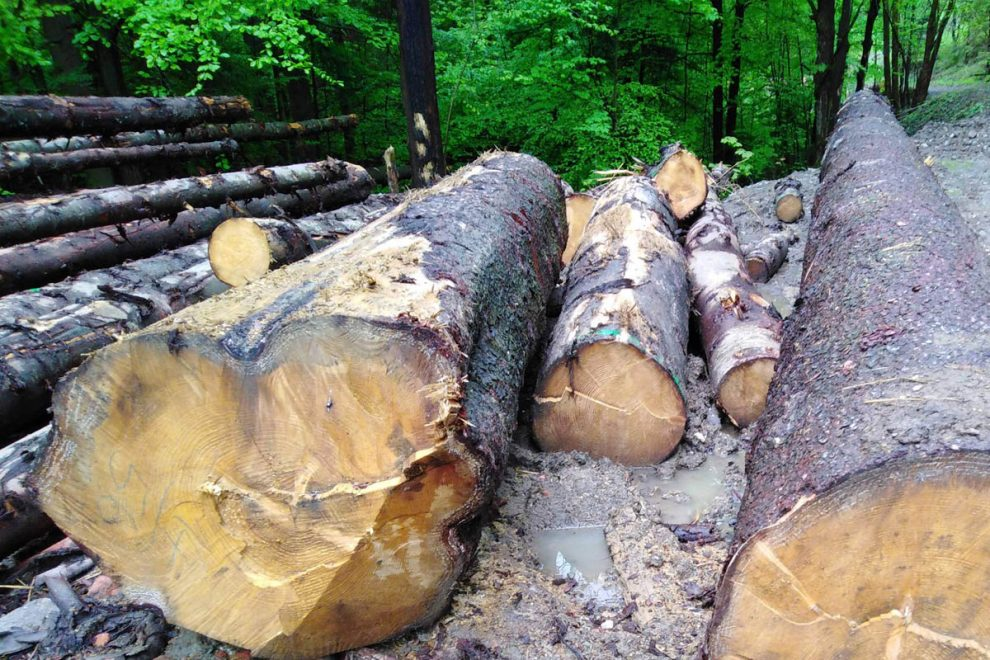 Záverečný audit š.p. LESY SR: v roku 2018 dodali 4,3 mil. m³ dreva