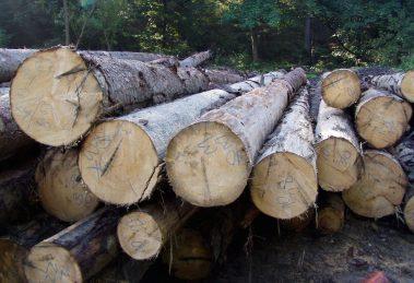 Májová elektronická aukcia dreva z OZ Trenčín a Čierny Balog